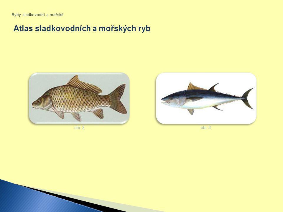 Ryby sladkovodní a mořské