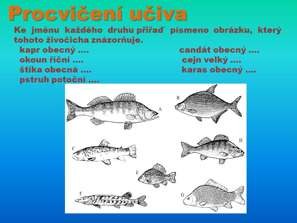 Procvičení učiva Ke jménu každého druhu přiřaď písmeno obrázku, který tohoto živočicha znázorňuje.