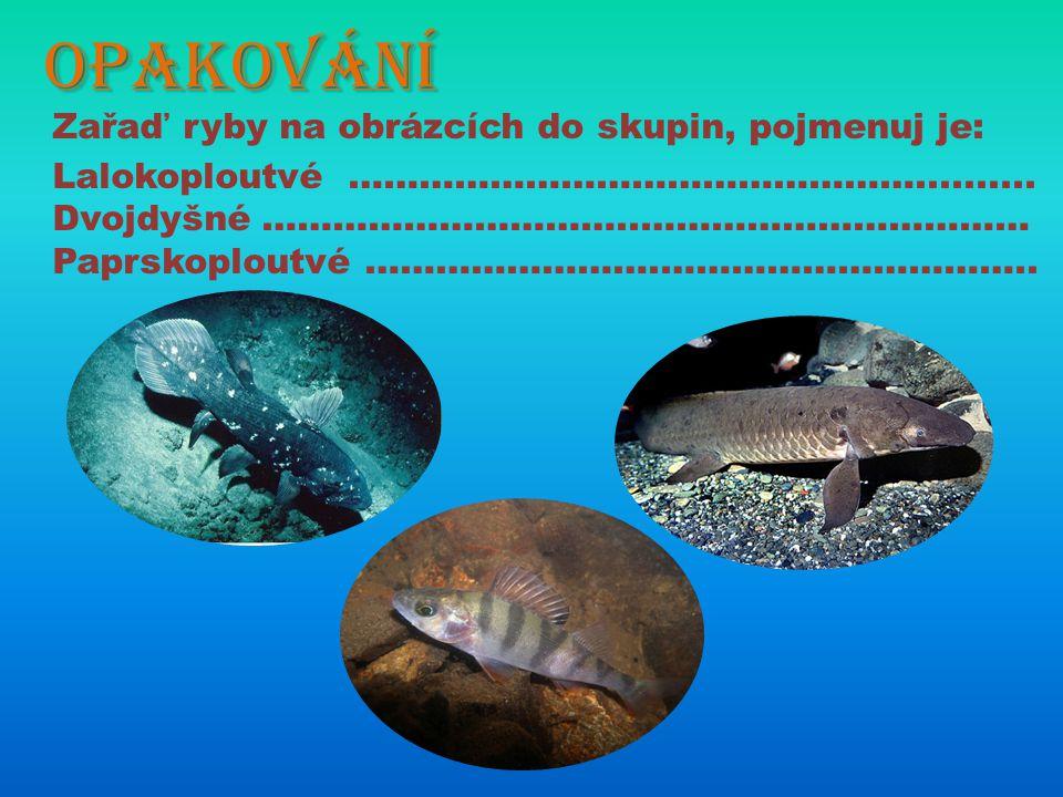 Opakování Zařaď ryby na obrázcích do skupin, pojmenuj je: