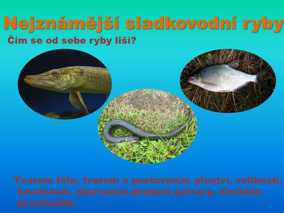 Nejznámější sladkovodní ryby