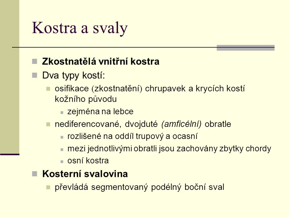 Kostra a svaly Zkostnatělá vnitřní kostra Dva typy kostí: