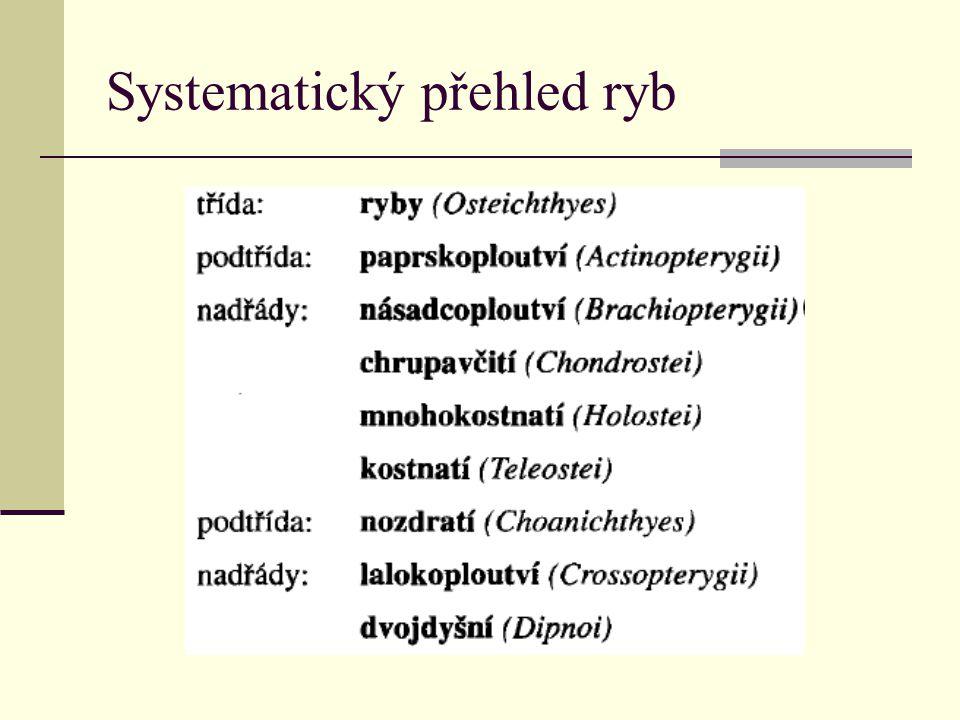 Systematický přehled ryb