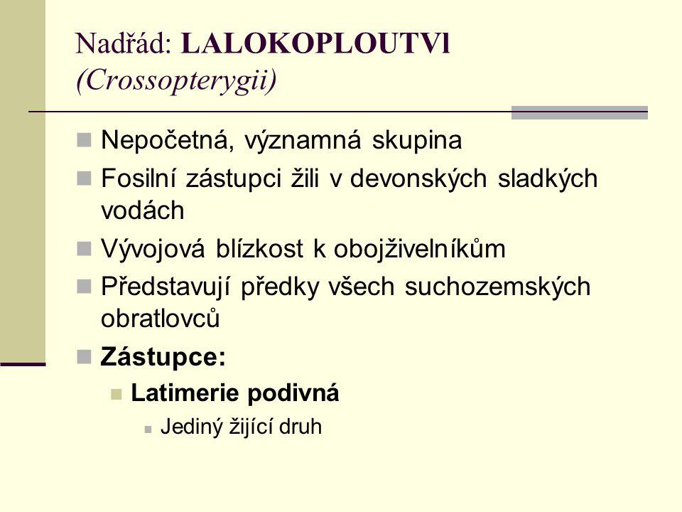 Nadřád: LALOKOPLOUTVl (Crossopterygii)