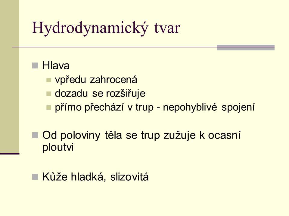 Hydrodynamický tvar Hlava