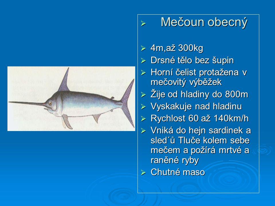 Mečoun obecný 4m,až 300kg. Drsné tělo bez šupin. Horní čelist protažena v mečovitý výběžek. Žije od hladiny do 800m.