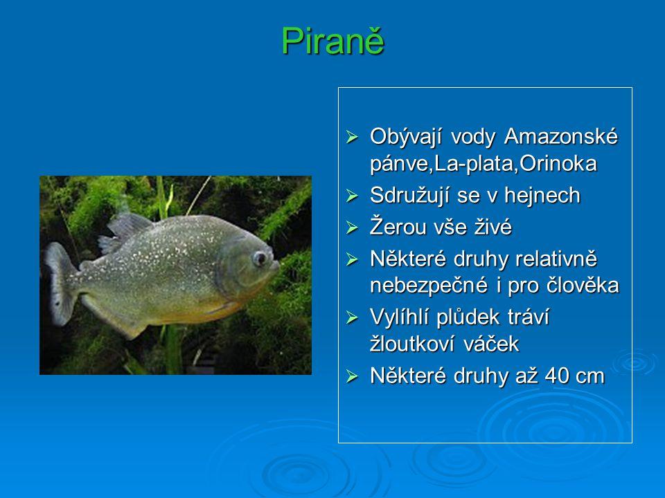Piraně Obývají vody Amazonské pánve,La-plata,Orinoka
