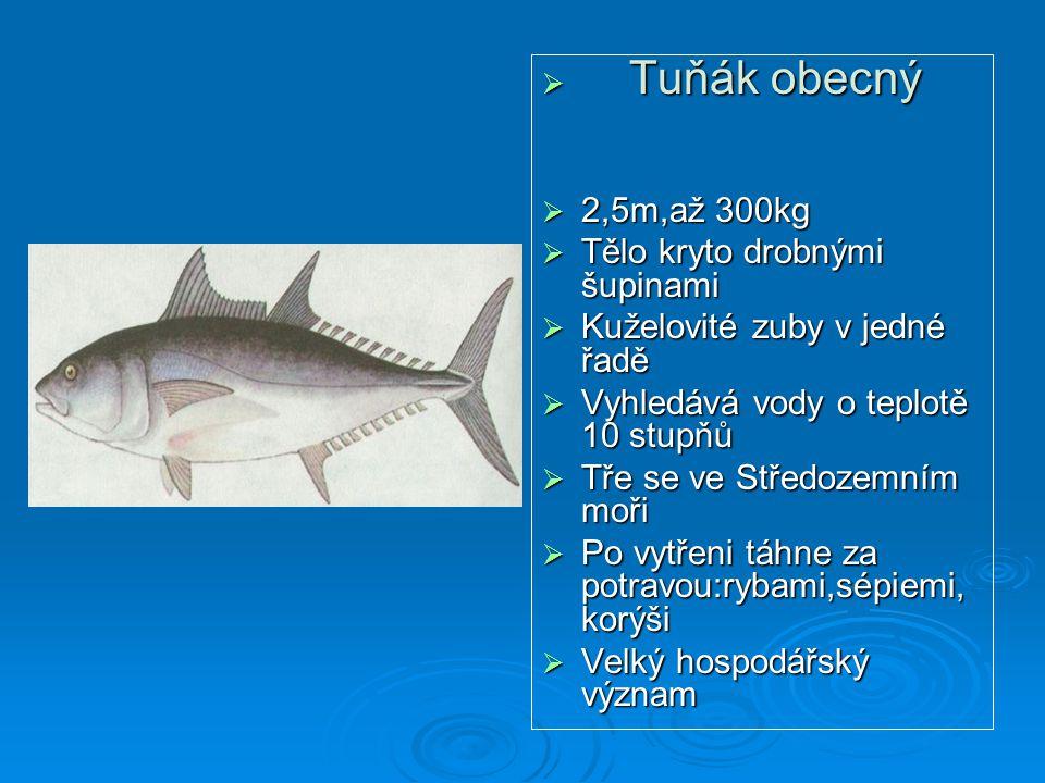 Tuňák obecný 2,5m,až 300kg. Tělo kryto drobnými šupinami. Kuželovité zuby v jedné řadě. Vyhledává vody o teplotě 10 stupňů.