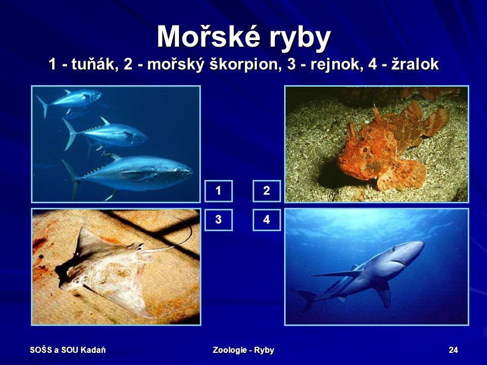 Mořské ryby 1 - tuňák, 2 - mořský škorpion, 3 - rejnok, 4 - žralok