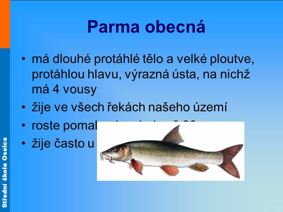 Parma obecná má dlouhé protáhlé tělo a velké ploutve, protáhlou hlavu, výrazná ústa, na nichž má 4 vousy.
