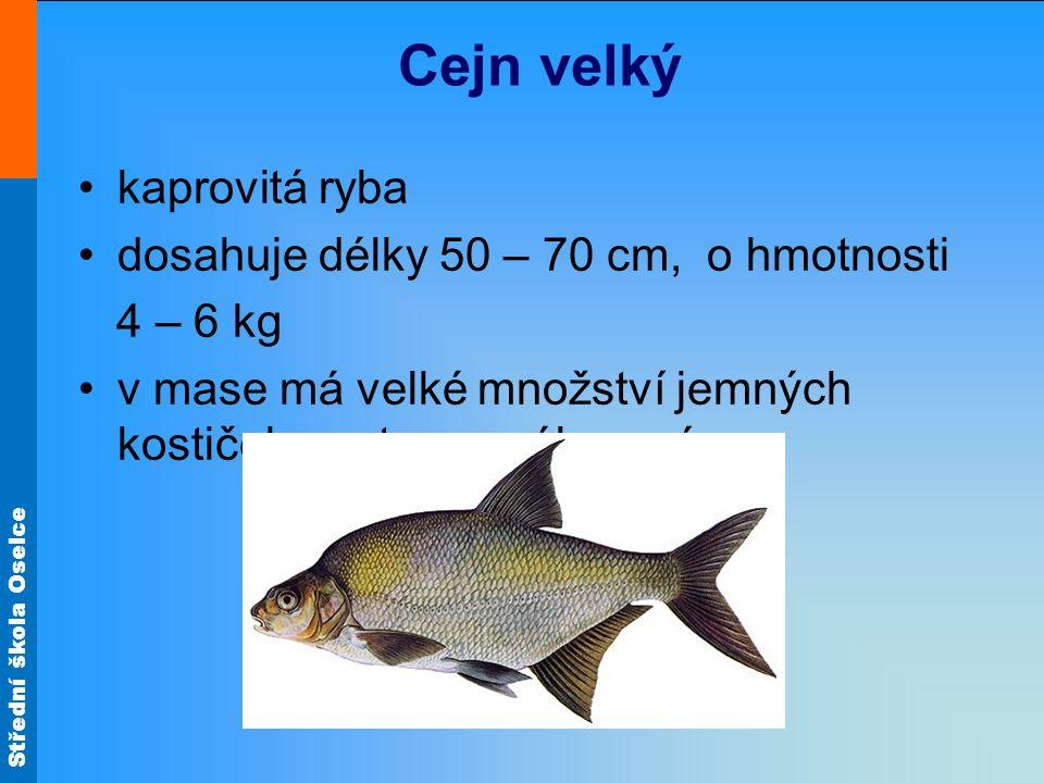 Cejn velký kaprovitá ryba dosahuje délky 50 – 70 cm, o hmotnosti