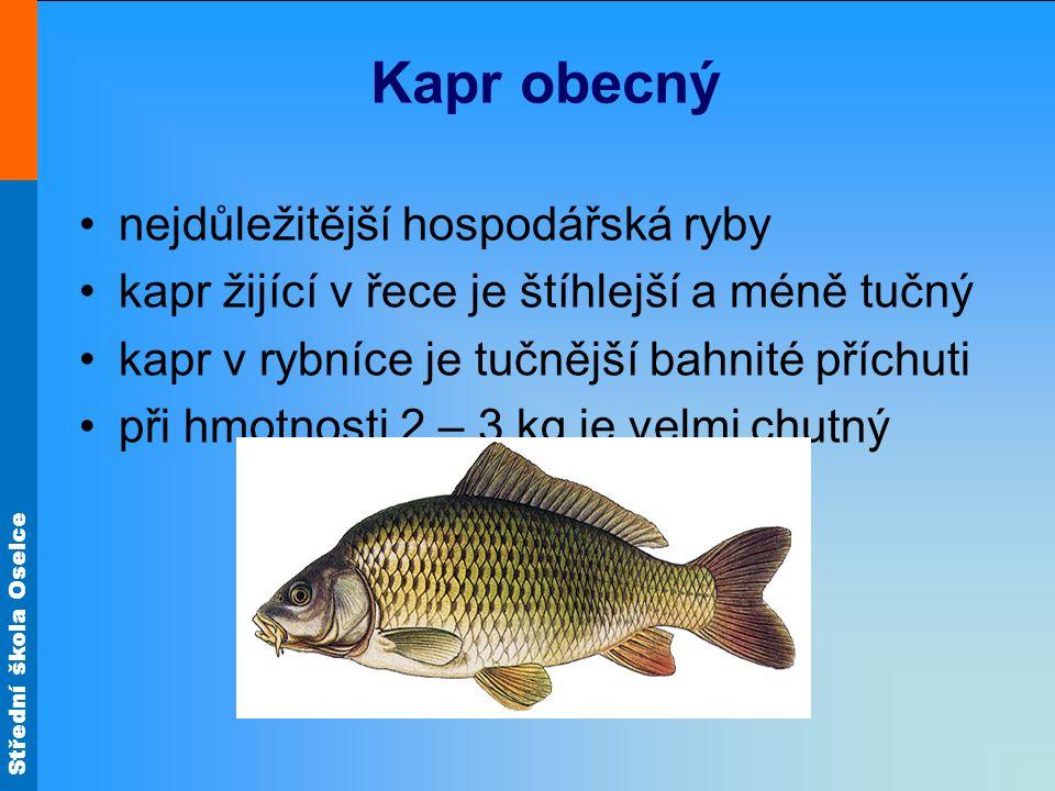 Kapr obecný nejdůležitější hospodářská ryby