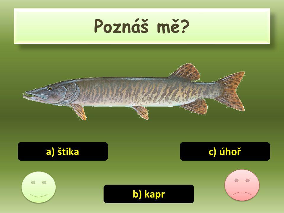 Poznáš mě a) štika c) úhoř b) kapr