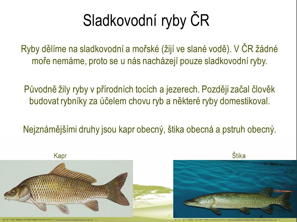 Nejznámějšími druhy jsou kapr obecný, štika obecná a pstruh obecný.