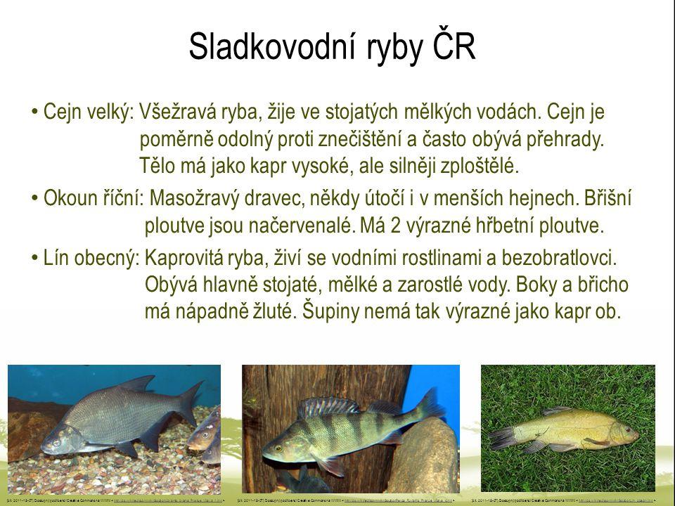 Sladkovodní ryby ČR