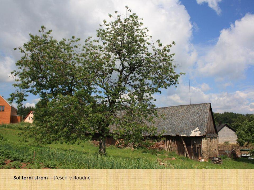 Ovocné stromy v krajině