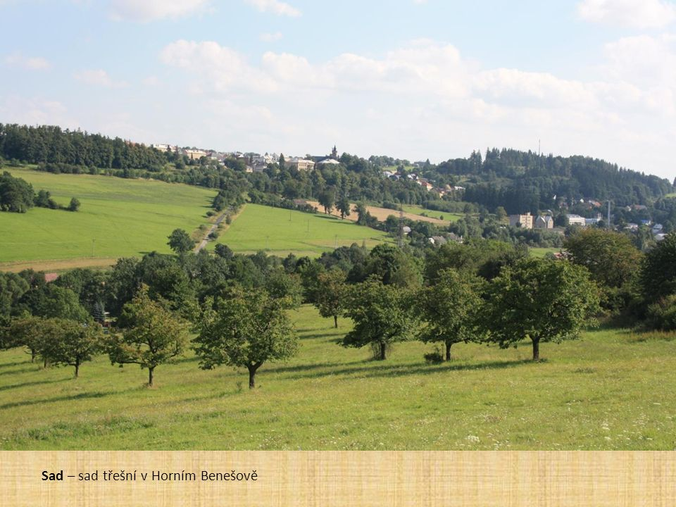 Sad – sad třešní v Horním Benešově