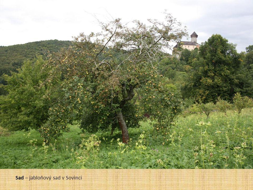 Sad – jabloňový sad v Sovinci