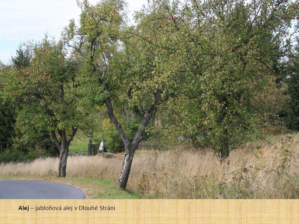 Alej – jabloňová alej v Dlouhé Stráni
