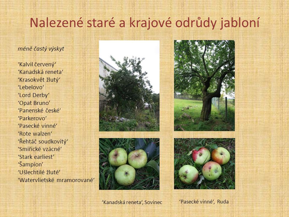 Nalezené staré a krajové odrůdy jabloní