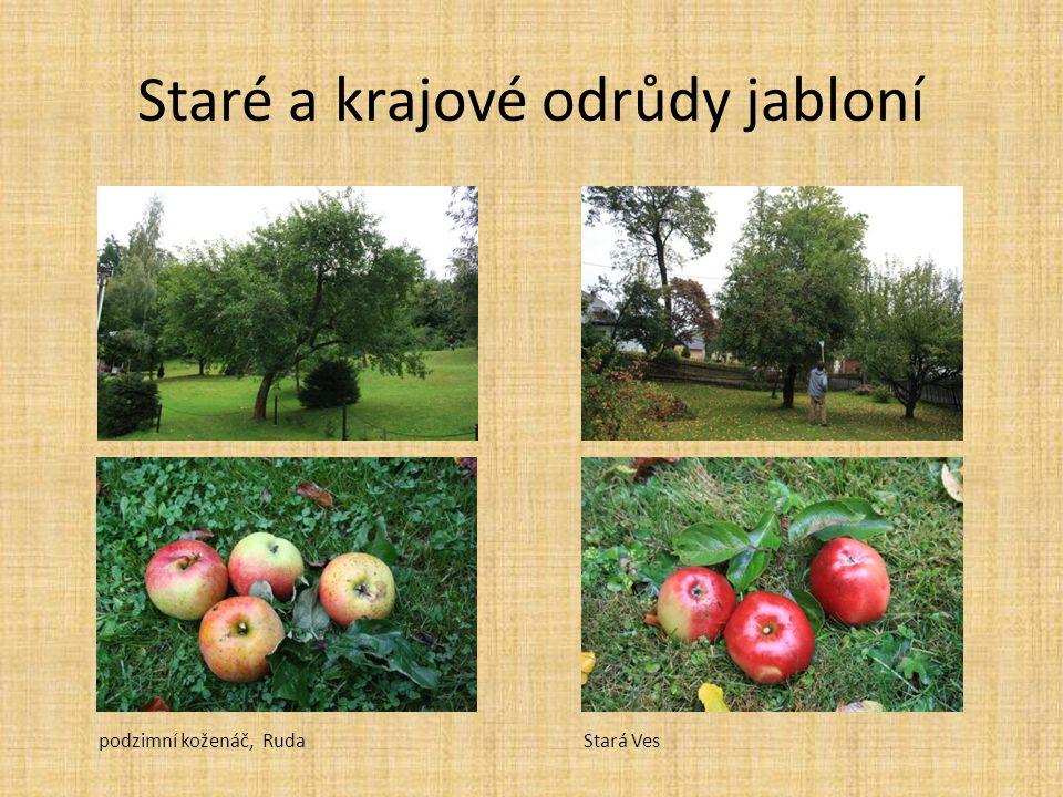 Staré a krajové odrůdy jabloní