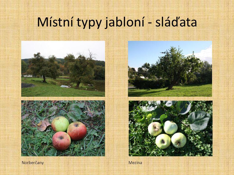 Místní typy jabloní - sláďata