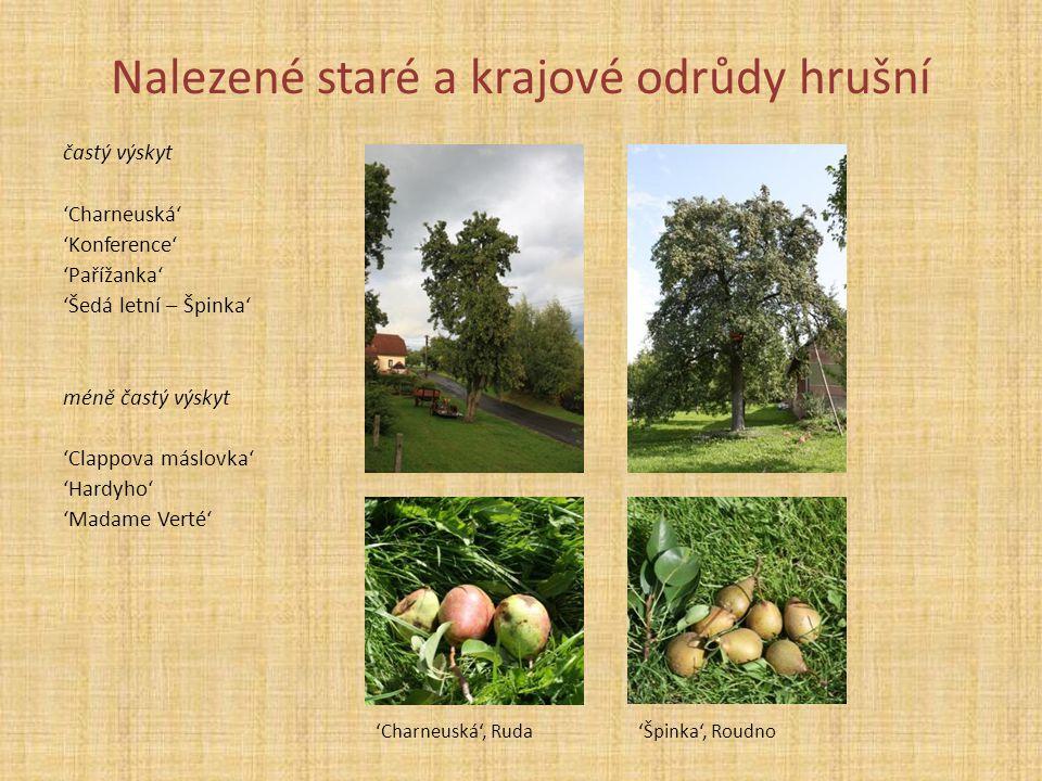 Nalezené staré a krajové odrůdy hrušní