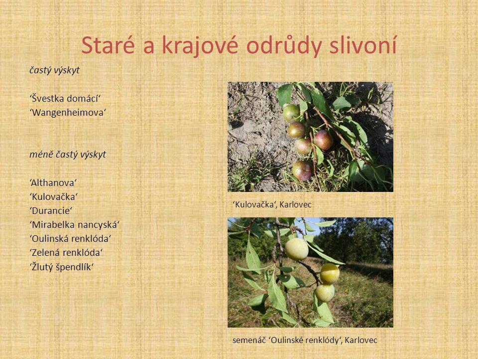 Staré a krajové odrůdy slivoní