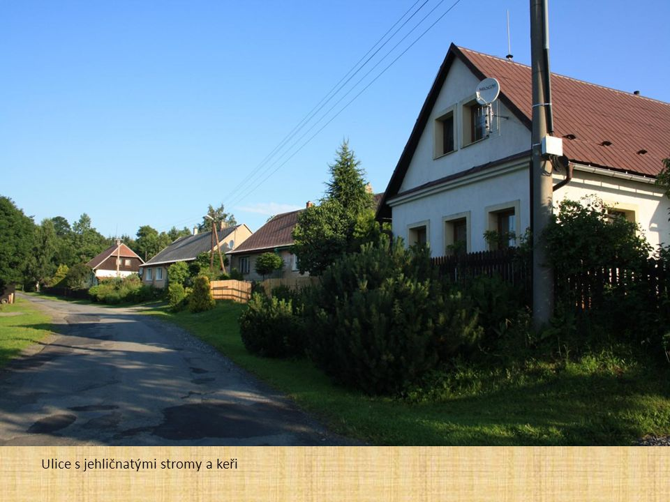 Ulice s jehličnatými stromy a keři