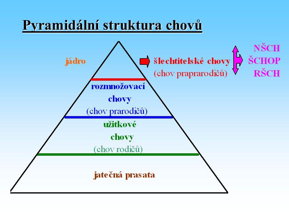 Pyramidální struktura chovů