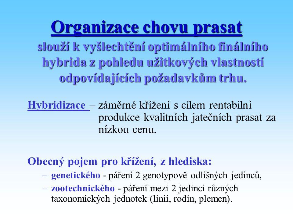 Organizace chovu prasat
