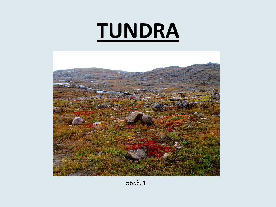 TUNDRA obr.č. 1