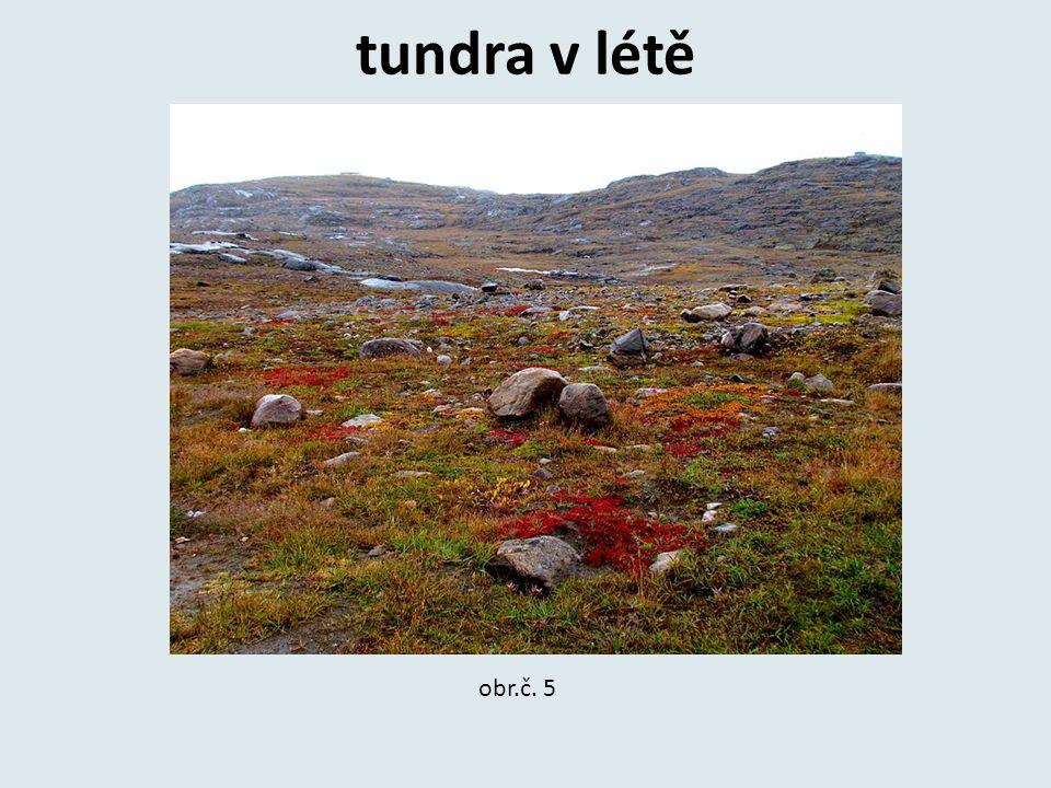 tundra v létě obr.č. 5
