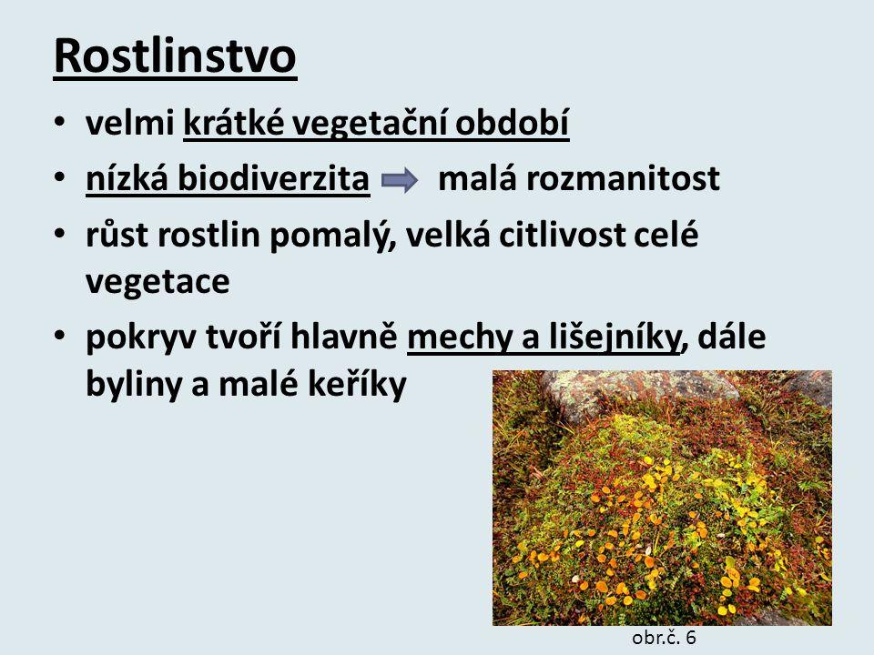Rostlinstvo velmi krátké vegetační období
