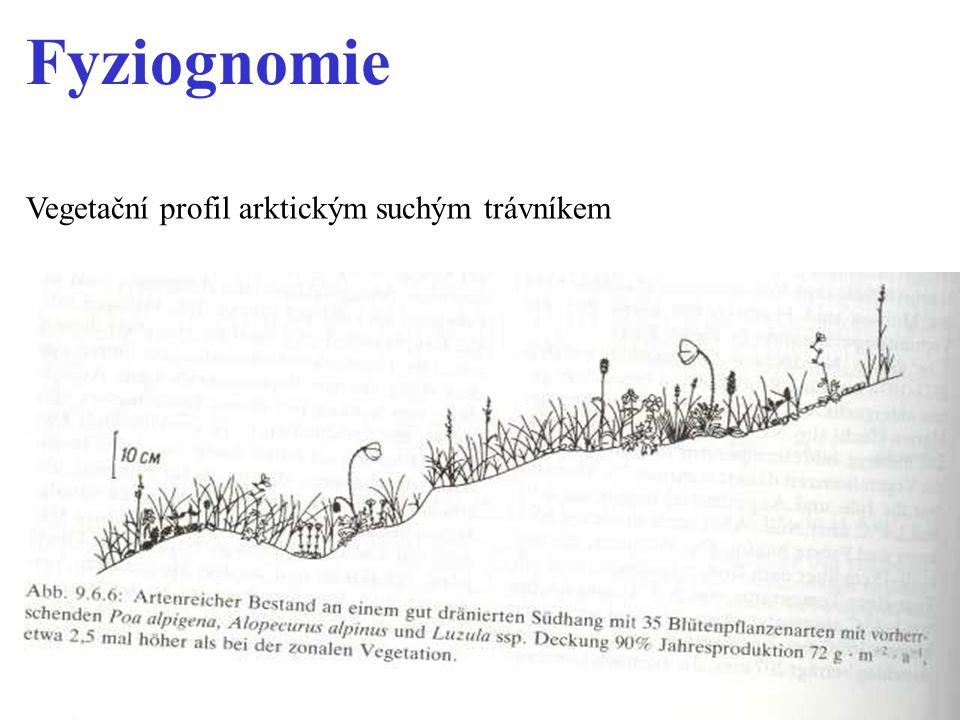 Fyziognomie Vegetační profil arktickým suchým trávníkem