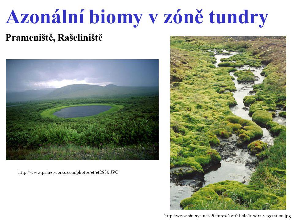 Azonální biomy v zóně tundry