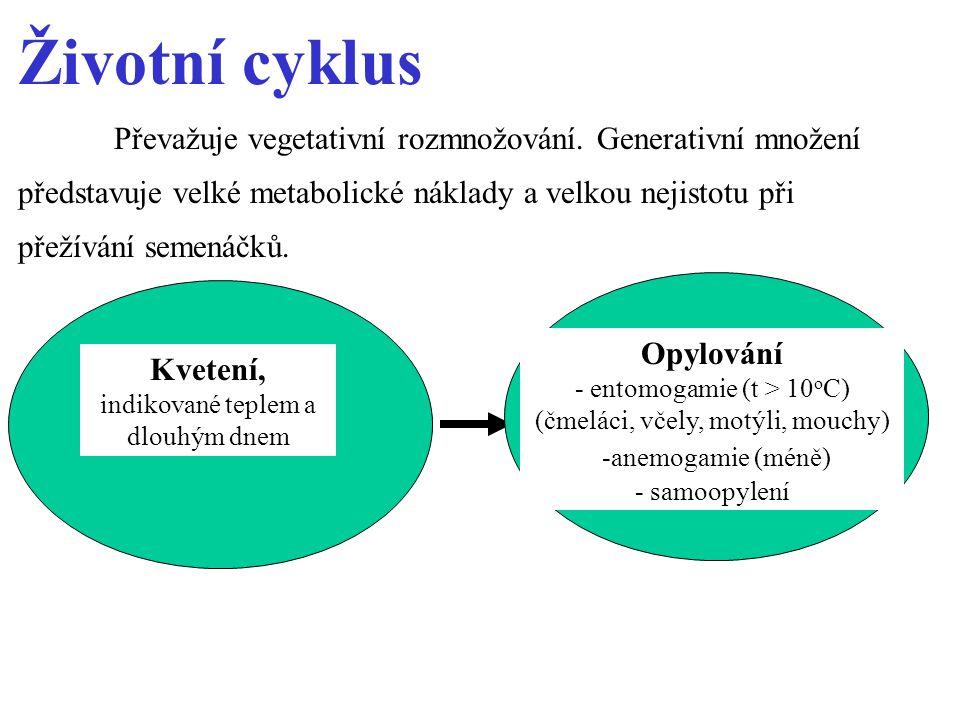 Životní cyklus