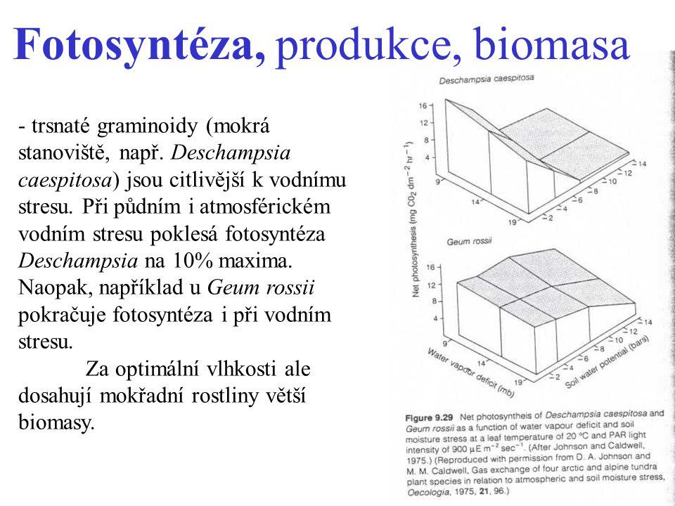 Fotosyntéza, produkce, biomasa