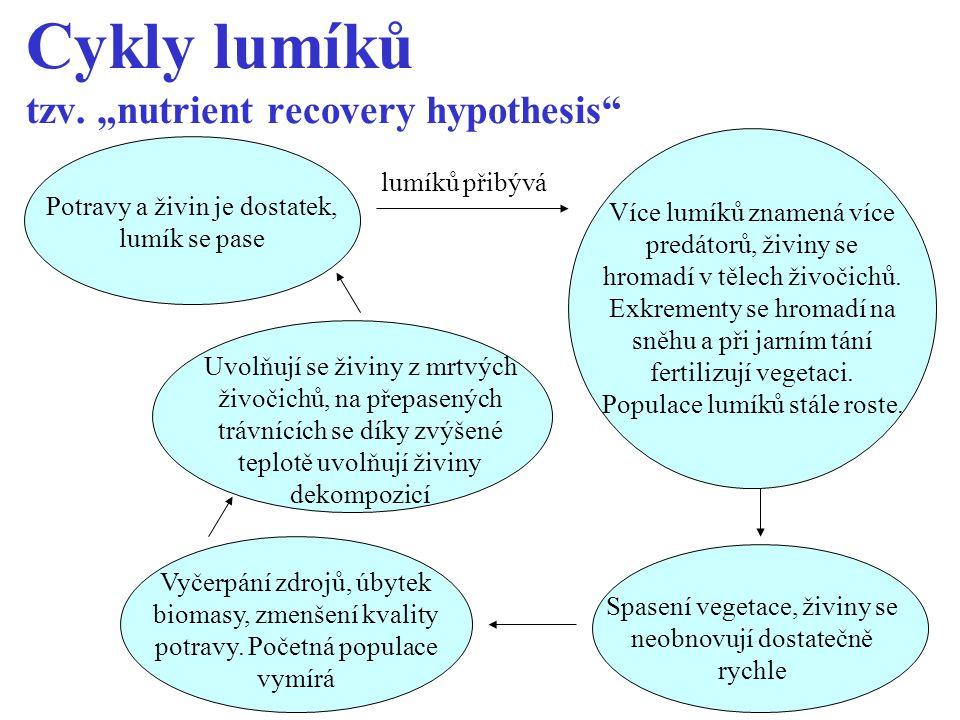 "Cykly lumíků tzv. ""nutrient recovery hypothesis"