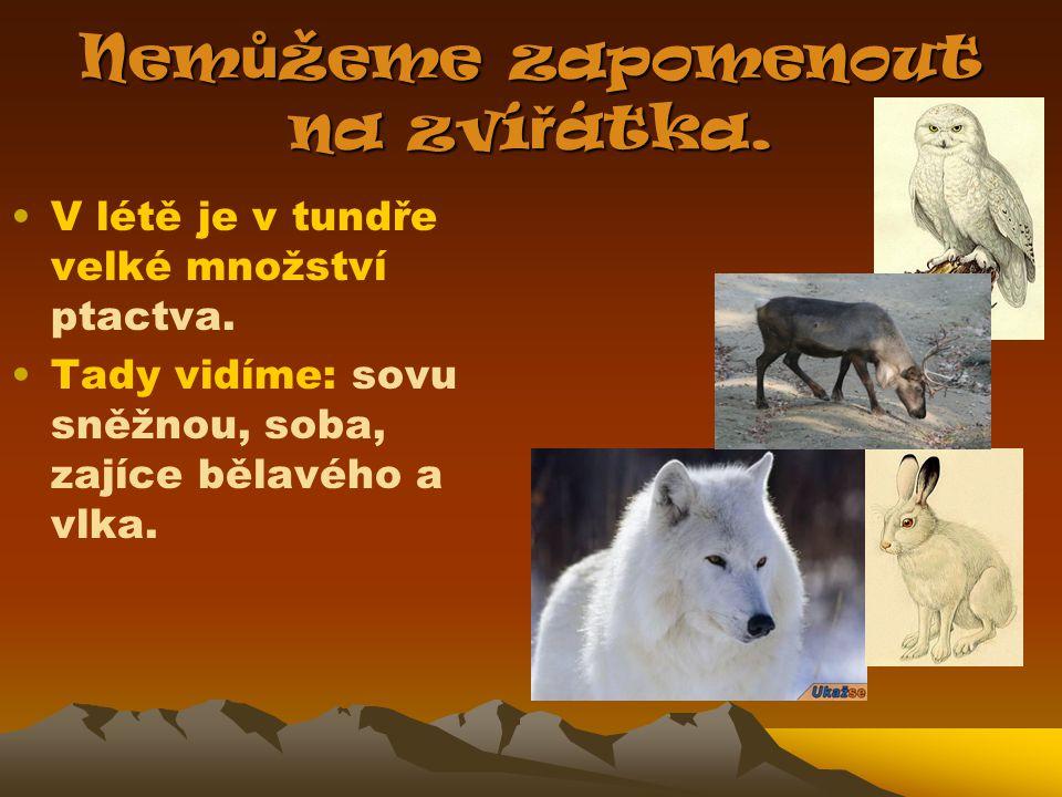 Nemůžeme zapomenout na zvířátka.