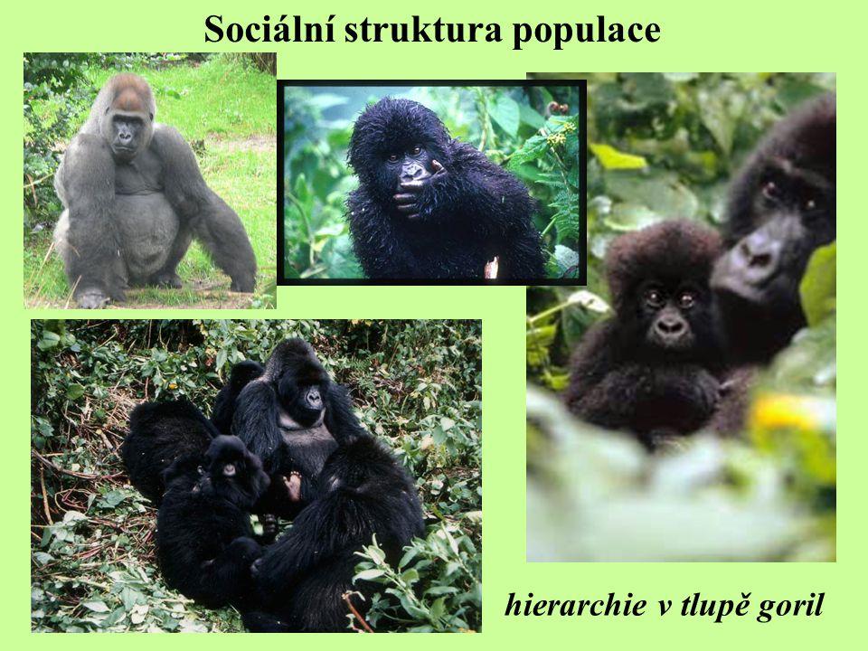 Sociální struktura populace