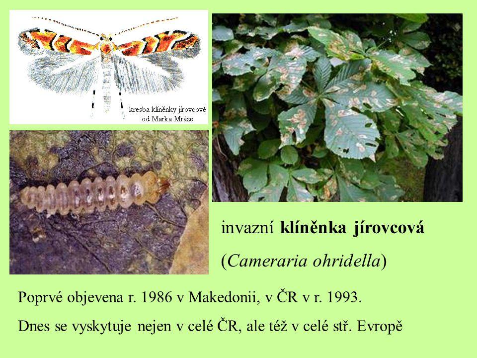 invazní klíněnka jírovcová (Cameraria ohridella)