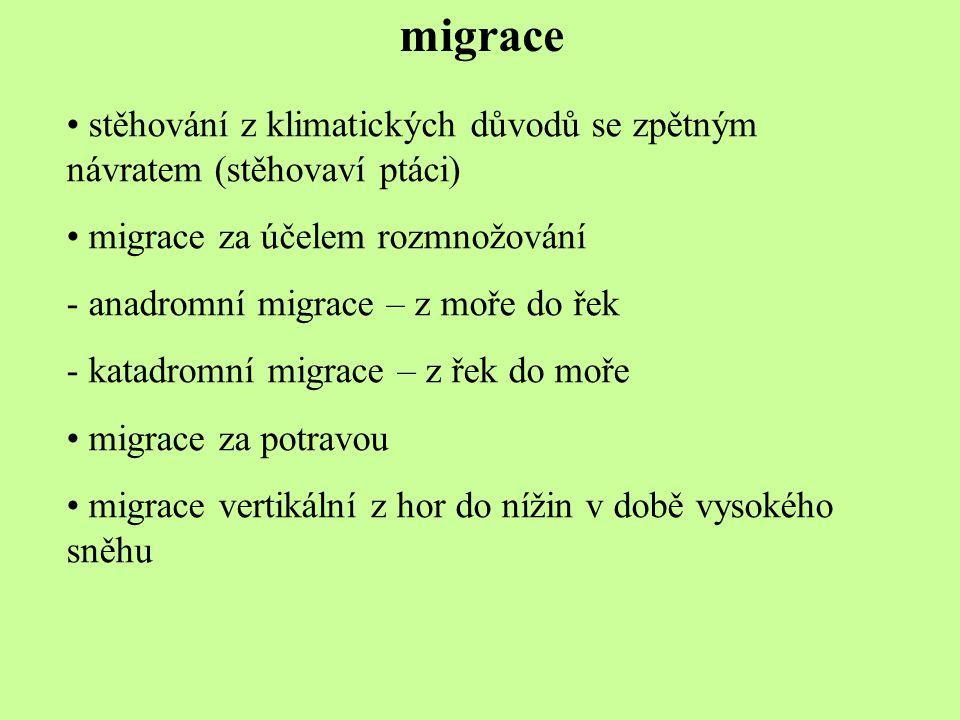 migrace stěhování z klimatických důvodů se zpětným návratem (stěhovaví ptáci) migrace za účelem rozmnožování.