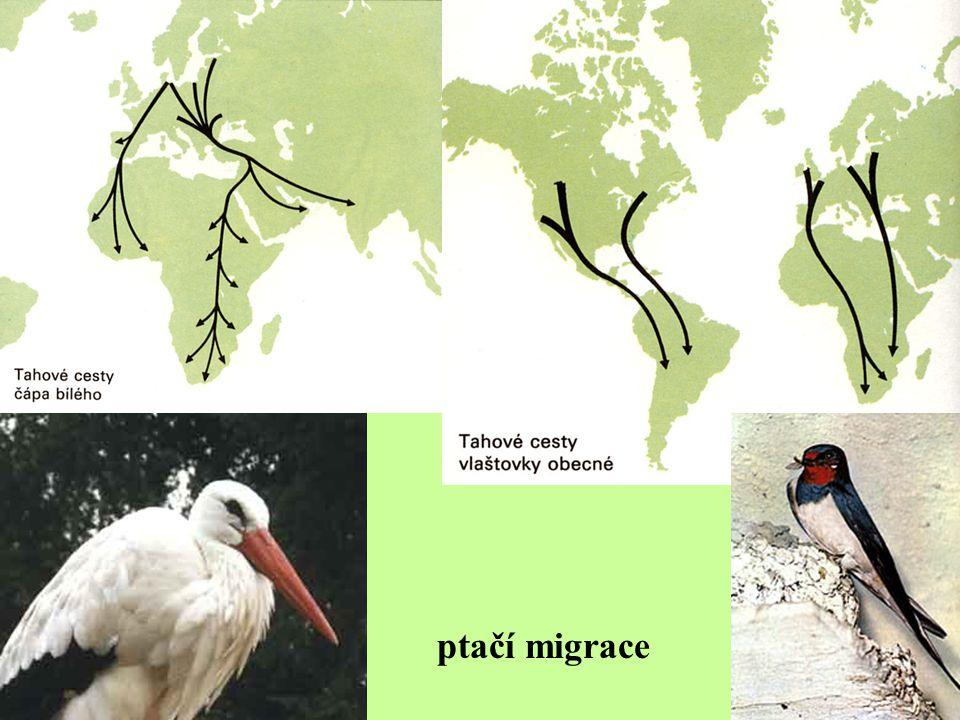 ptačí migrace