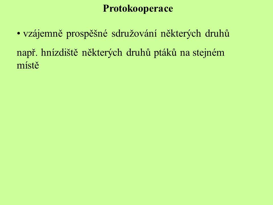 Protokooperace vzájemně prospěšné sdružování některých druhů.