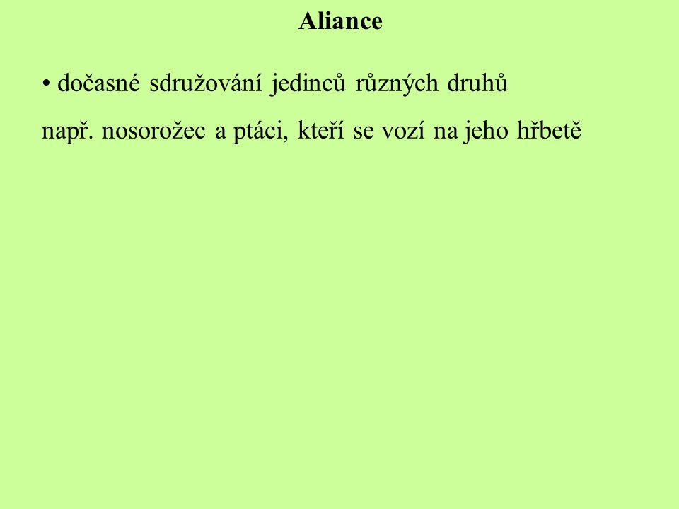 Aliance dočasné sdružování jedinců různých druhů. např.