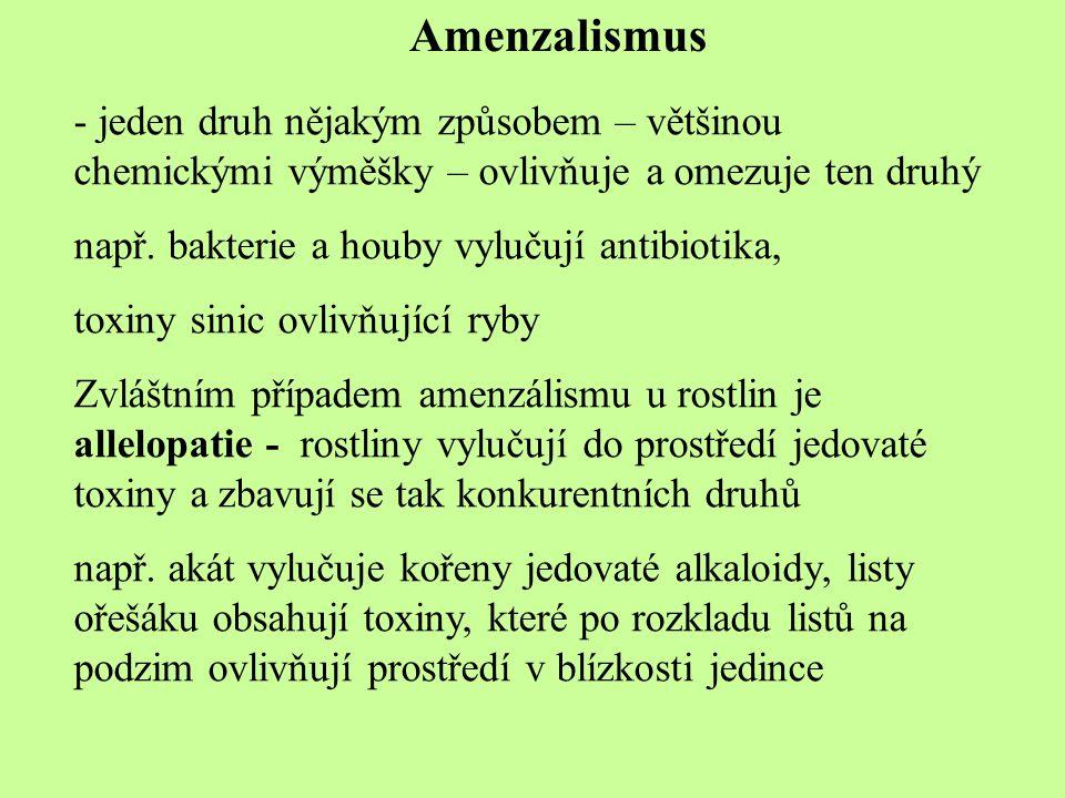 Amenzalismus jeden druh nějakým způsobem – většinou chemickými výměšky – ovlivňuje a omezuje ten druhý.