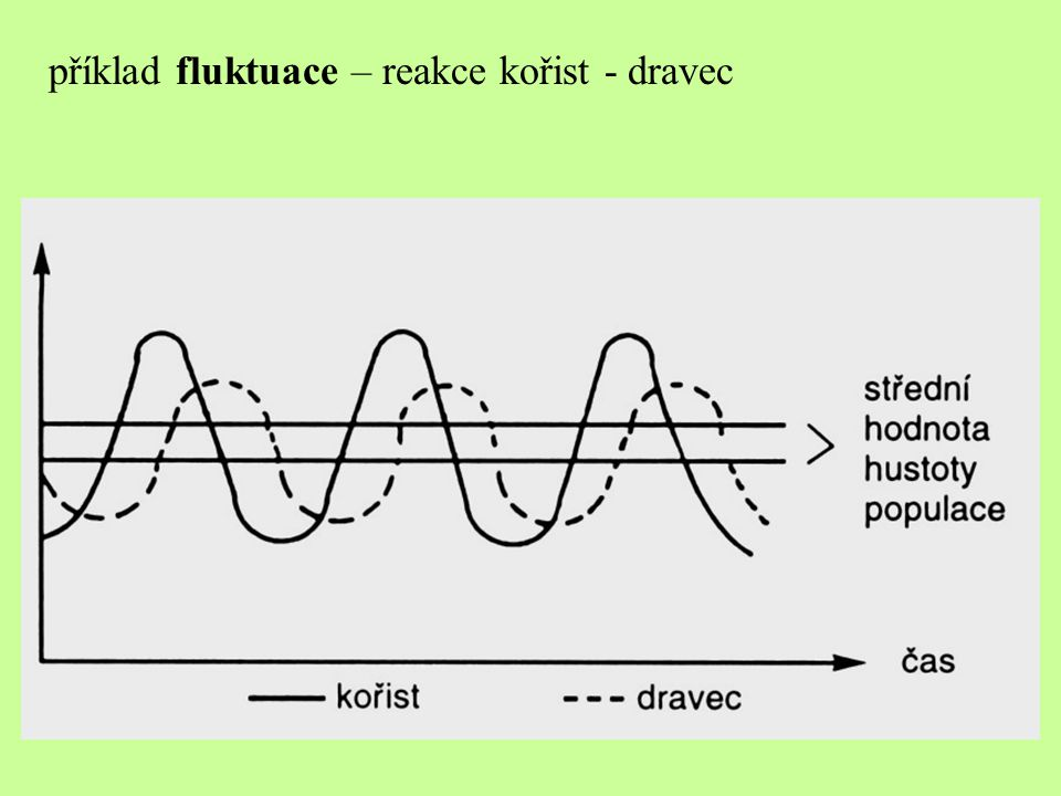 příklad fluktuace – reakce kořist - dravec