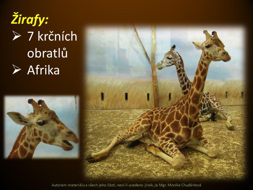 Žirafy: 7 krčních obratlů Afrika