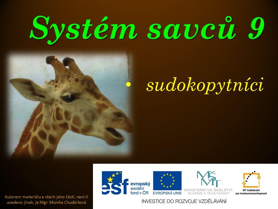 Systém savců 9 sudokopytníci