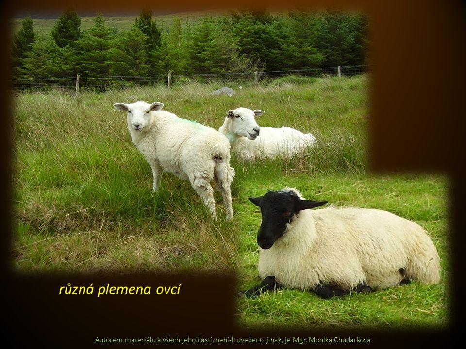 různá plemena ovcí Autorem materiálu a všech jeho částí, není-li uvedeno jinak, je Mgr.
